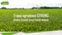 Trawa do ogrodu, trawa ogrodowa strong | Trawnik Producent