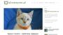 Jakie szelki i smycz dla kota kupić? RANKING 2019