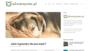 Legowisko dla psa - jakie kupić? RANKING 2019